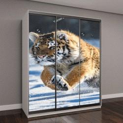"""Шкаф купе с фотопечатью """"Амурский тигр в снегу (Panthera тигр) """""""