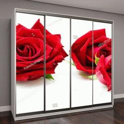"""Шкаф купе с фотопечатью """"Красивая красная роза, изолированные на белом"""""""