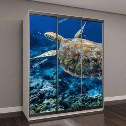 """Шкаф купе с фотопечатью """"Зеленая морская черепаха над коралловым рифом"""""""