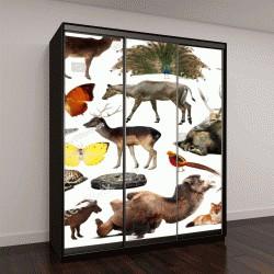 """Шкаф купе с фотопечатью """"азиатские дикие животные, включая птиц, млекопитающих, рептилий и насекомых"""""""