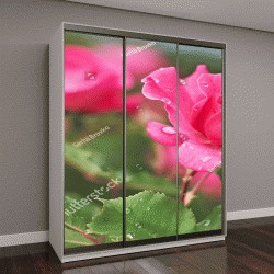 """Шкаф купе с фотопечатью """"Розовый цветок розы с каплями воды на фоне розовых роз цветы"""""""