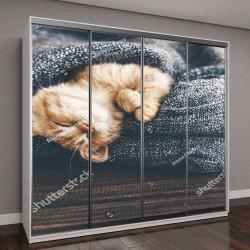 """Шкаф купе с фотопечатью """"маленький рыжий котенок спит """""""