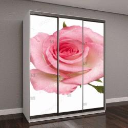 """Шкаф купе с фотопечатью """"нежная розовая роза на белом фоне"""""""