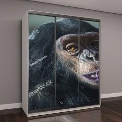 "Шкаф купе с фотопечатью ""Шимпанзе"""
