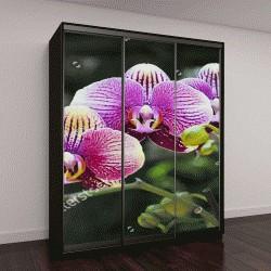 """Шкаф купе с фотопечатью """"Цветок орхидеи в тропическом саду"""""""
