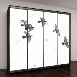 """Шкаф купе с фотопечатью """"Птицы летают в воздухе"""""""