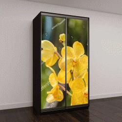"""Шкаф купе с фотопечатью """"Желтая орхидея в Таиланде"""""""