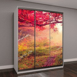 """Шкаф купе с фотопечатью """"Величественный пейзаж с осенними деревьями в лесу"""""""