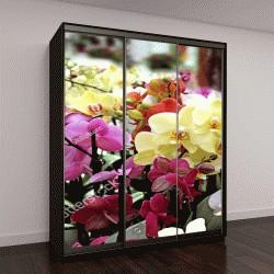 """Шкаф купе с фотопечатью """"Орхидеи разных цветов, Голландия"""""""