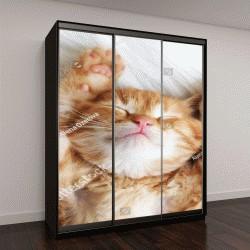 """Шкаф купе с фотопечатью """"Милый маленький рыжий котенок спит """""""