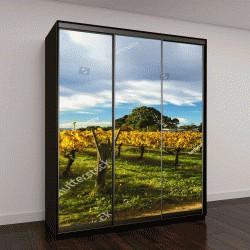 """Шкаф купе с фотопечатью """"Виноградники в Суон-Вэлли, неподалеку от Перта, Австралия"""""""