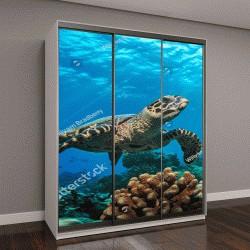 """Шкаф купе с фотопечатью """"Красивая подводная черепаха"""""""