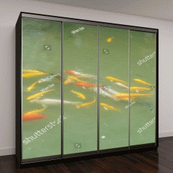 """Шкаф купе с фотопечатью """"Красочные золотые рыбы, плавающие в зеленом пруду"""""""