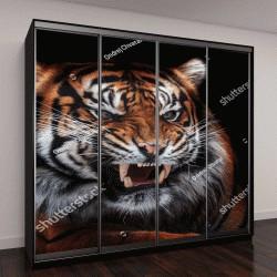 """Шкаф купе с фотопечатью """"Тигр суматранский (Panthera тигр sumatrae) красивое животное и его портрет"""""""