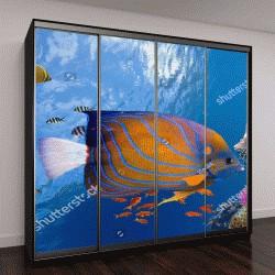 """Шкаф купе с фотопечатью """"подводный мир с кораллами и тропическими рыбами, Красное море"""""""
