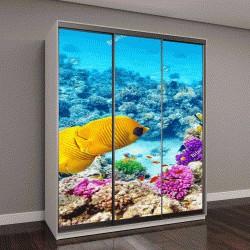 """Шкаф купе с фотопечатью """" красивый подводный мир с кораллами и тропическими рыбами"""""""