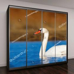 """Шкаф купе с фотопечатью """"Плавание лебедя"""""""