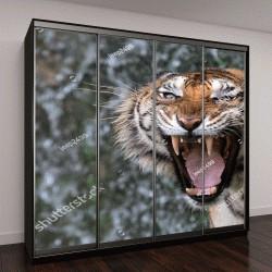 """Шкаф купе с фотопечатью """"Рев тигра"""""""