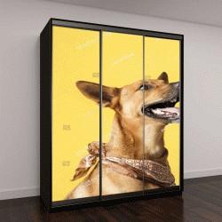 """Шкаф купе с фотопечатью """"Счастливая, любопытная собака """""""