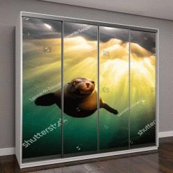 """Шкаф купе с фотопечатью """"Калифорнийский морской лев """""""
