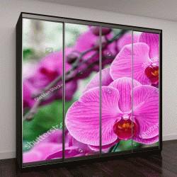 """Шкаф купе с фотопечатью """"Цветок орхидеи в саду в зимний день """""""
