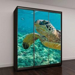 """Шкаф купе с фотопечатью """"морская черепаха крупным планом """""""