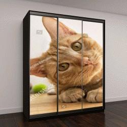 """Шкаф купе с фотопечатью """"рыжий кот с наклоненной головой"""""""