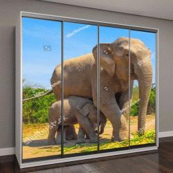 """Шкаф купе с фотопечатью """"Слоны наслаждаются жизнью в лагере слонов """"Патара"""" """""""