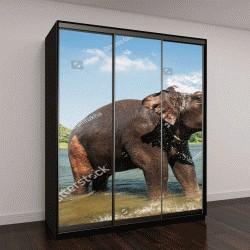 """Шкаф купе с фотопечатью """"Купание слонов на южном берегу реки Перияр на обучение Kodanad центр, Керала, Индия"""""""