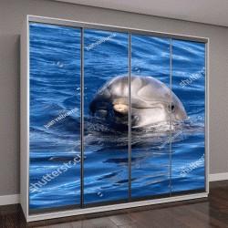 """Шкаф купе с фотопечатью """"Дельфин в океане"""""""