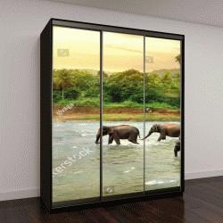 """Шкаф купе с фотопечатью """"Слоны в реке"""""""