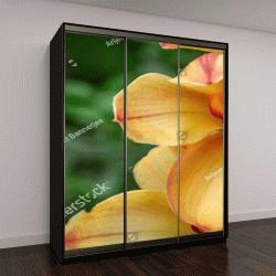 """Шкаф купе с фотопечатью """"Оранжевый и красный орхидея Цимбидиум гибридный с выборочный фокус, лодка цветок орхидеи в теплице в восточных Гималаях"""""""