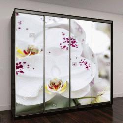 """Шкаф купе с фотопечатью """"Цветок орхидеи в саду """""""