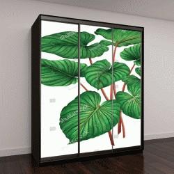 """Шкаф купе с фотопечатью """"Акварельная живопись-зеленые листья,пальмовые листья, изолированные на белом фоне"""""""
