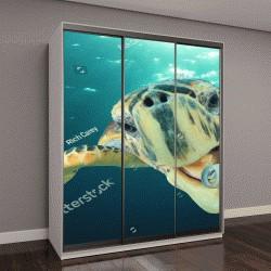 """Шкаф купе с фотопечатью """"морская черепаха ест пластиковые бутылки """""""