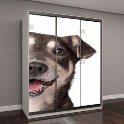 """Шкаф купе с фотопечатью """"Кошка и собака, глядя на камеру на белом фоне"""""""