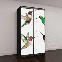 """Шкаф купе с фотопечатью """"Выделяют четыре маленькие птицы колибри"""""""