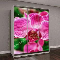 """Шкаф купе с фотопечатью """"розовый фаленопсис в саду"""""""