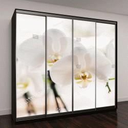 """Шкаф купе с фотопечатью """"белая орхидея"""""""