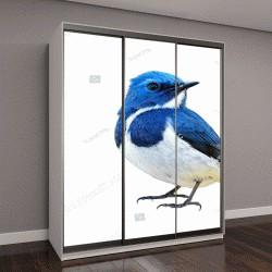 """Шкаф купе с фотопечатью """"Синяя птица, ультрамариновая мухоловка """""""