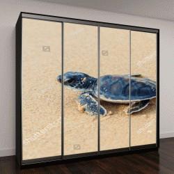 """Шкаф купе с фотопечатью """"Зеленая морская черепаха """""""