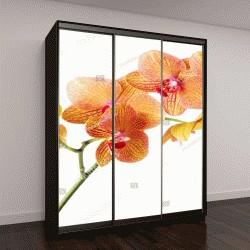 """Шкаф купе с фотопечатью """"веточка орхидеи на белом фоне"""""""