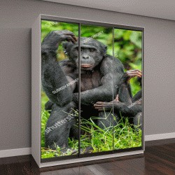 """Шкаф купе с фотопечатью """"Самка бонобо с ребенком сидит на траве"""""""