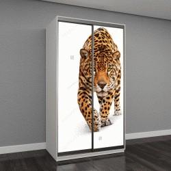 """Шкаф купе с фотопечатью """"Ягуар, Пантера"""""""