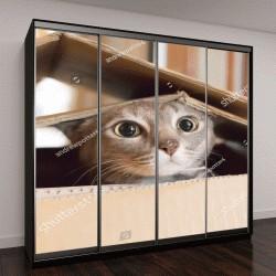 """Шкаф купе с фотопечатью """"Кошка играет в прятки в картонной коробке"""""""