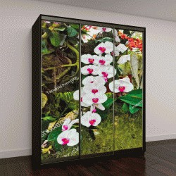 """Шкаф купе с фотопечатью """"орхидеи в парке Бурирам, Таиланд"""""""