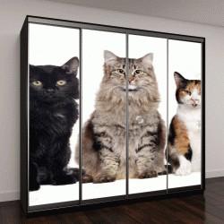 """Шкаф купе с фотопечатью """"Группа кошек разных пород """""""