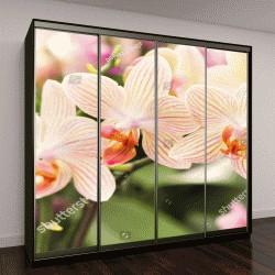 """Шкаф купе с фотопечатью """"Двуцветные цветки орхидеи"""""""