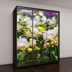 """Шкаф купе с фотопечатью """"Горшечные орхидеи на прилавке в магазине"""""""