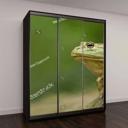 """Шкаф купе с фотопечатью """"Африканская лягушка-бык является плотоядной и прожорливый, ест насекомых, мелких грызунов, рептилий, мелких птиц и других земноводных"""""""